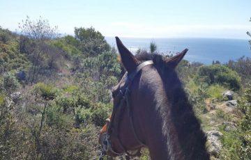 Residence-il-borgo-attivita-passeggiate-cavallo